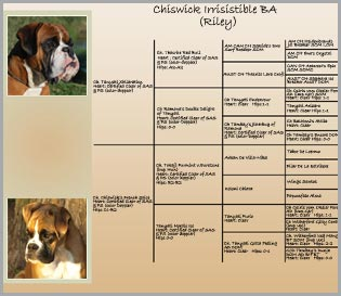 Pedigree of Chiswick Irrisistible BA